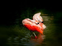 Flamingo in Love von Christine  Hofmann