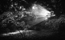 Sunrays von Barbara  Keichel