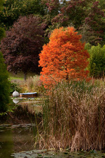 swamp acer by Karl Thompson
