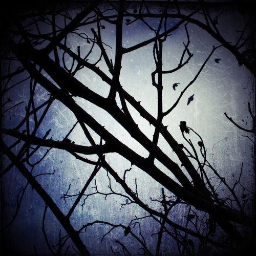 Wintermoon-c-sybillesterk