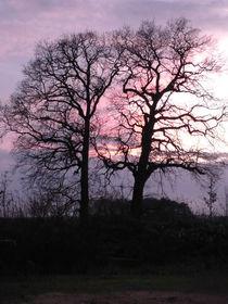 Wintertime von Angelika Reeg