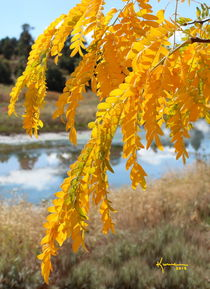 Yellow Autumn von Kume Bryant