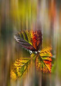 Herbstfarben by Thomas Schulz