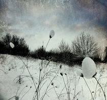Snow Burs von florin