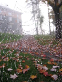 Autumn rain web by luba-mark