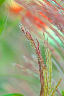 Versteckte Schönheiten by © Ivonne Wentzler