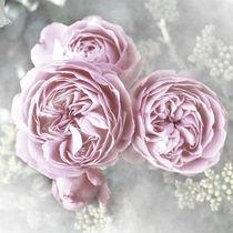 Pink Roses by Christine Bässler