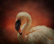 Flamingo Pink by Tina  Lindsay