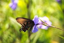Lavender Butterfly by bibi-photo-hunter