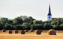Erntezeit in Leeheim von steda-fotografie