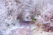 Footpath to Narnia by Dawn Cox