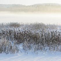 Frosty grass straws von Mikael Svensson