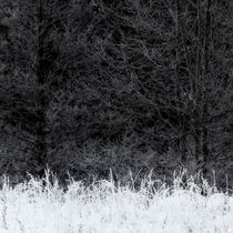 Frosty von Mikael Svensson