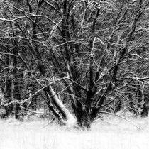 Winter tree von Mikael Svensson