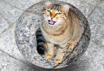 Katzenkugel von Angelika Wiedemeyer