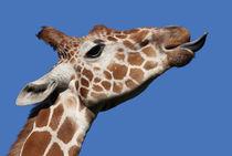 Giraffe von Mary Lane