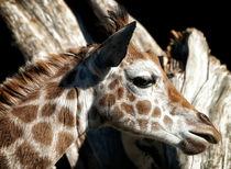 Baby Giraffe von Mary Lane
