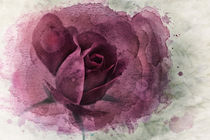 Magenta Rose by Betty LaRue