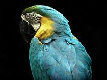 Parrot von Mary Lane