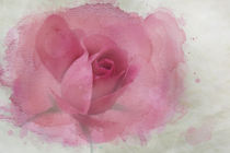 Pink Rose Watercolor by Betty LaRue