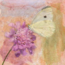 Wings of Beauty by Betty LaRue