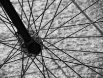 Spokes  by Mary Lane