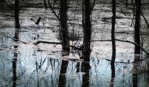 The Swamp von Mary Lane
