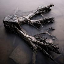 Tree Roots von Mikael Svensson