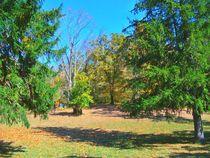 A Crisp Autumn Day von skyler