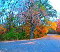 Beautiful Fall Drive von skyler