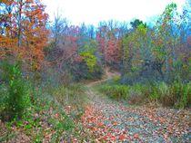 Hiking Up The Hill On Splendid Fall Day von skyler