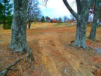 Between The Trees by skyler