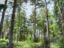 Langsett Forest von Sarah Couzens