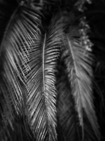 palm leaves by dayle ann  clavin