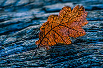 Fallen leaf von Giuseppe Maria Galasso