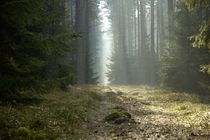 Way in Forest by Björn Hesener