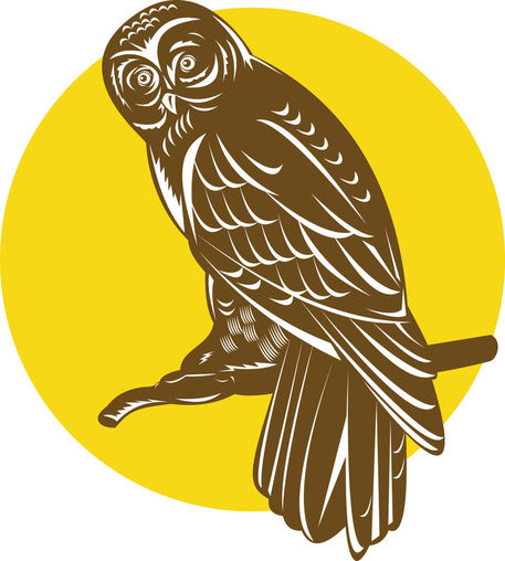Nx-great-grey-owl