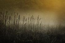 Reed  von Barbara  Keichel