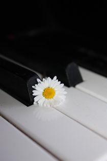 musikalisches Gänseblümchen by Edeltraut K.  Schlichting