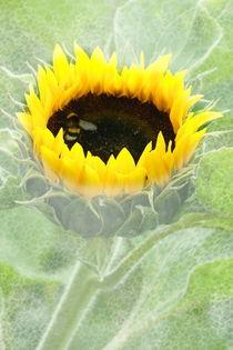 Sonnenblume by Christine Bässler