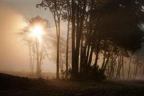Morning-glory-fullsize