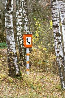 Hilferuf aus dem Wald von Angelika Wiedemeyer