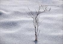 Winterzeit von Ralf Nentwig