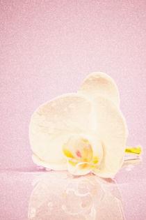 Orchidee by Angelika Wiedemeyer