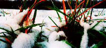Grass Through Snow von florin