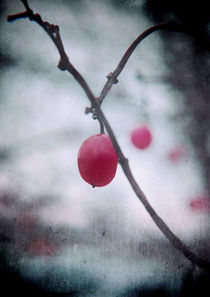 Lonely Winterberry von Sybille Sterk