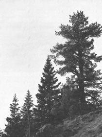 Fotosketcher-forest-ridge