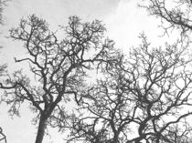 Fotosketcher-tree-branches