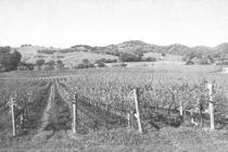 Vineyard von Frank Wilson