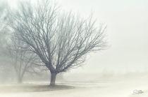 Quiet Mist von Szantai Istvan